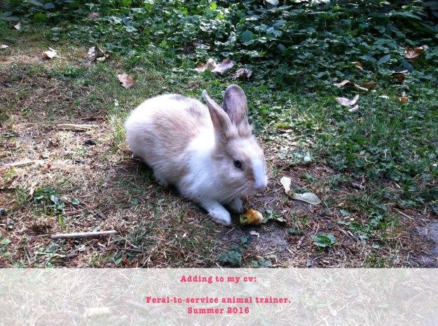 service-animal-trainer